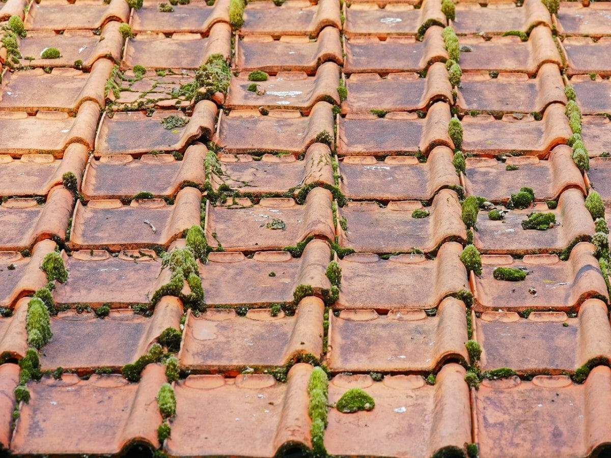 nokvorst reparatie, nokvorst renovatie in 4152 Rhenoy